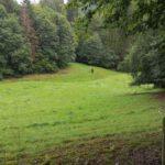 Hammelbach_2020_043