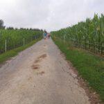 Hammelbach_2020_053