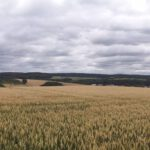 Lobenfeld_2020_002