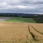 Lobenfeld_2020_003